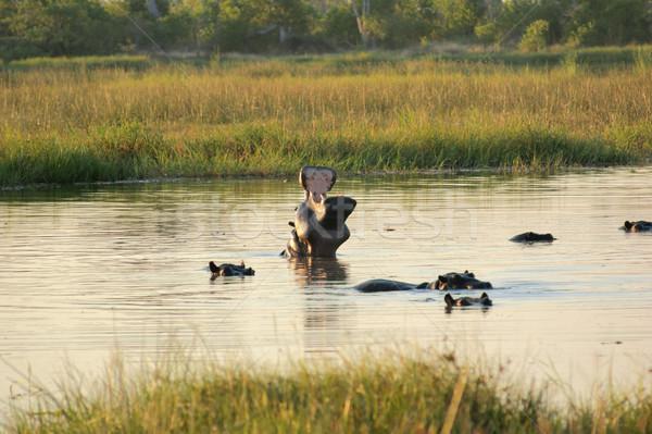 Botsvana nehir oyun rezerv Afrika Stok fotoğraf © prill