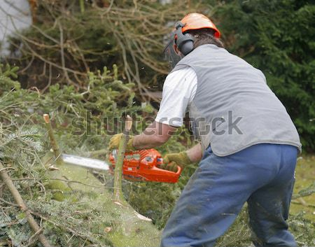 lumberman at work Stock photo © prill