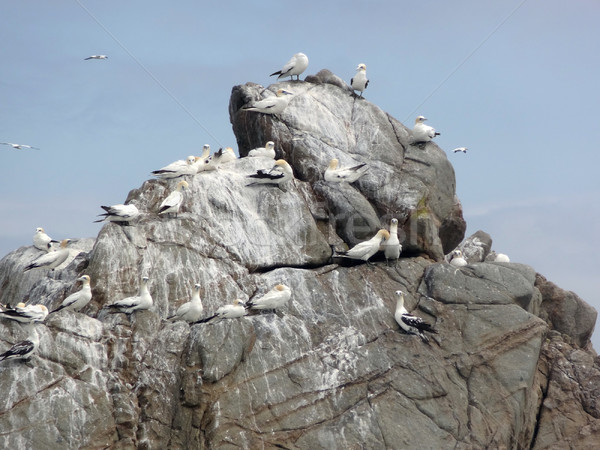 bird sanctuary at Seven Islands Stock photo © prill