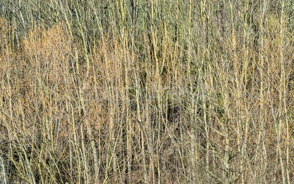 スロープ 森林 表示 早い 春 ストックフォト © prill