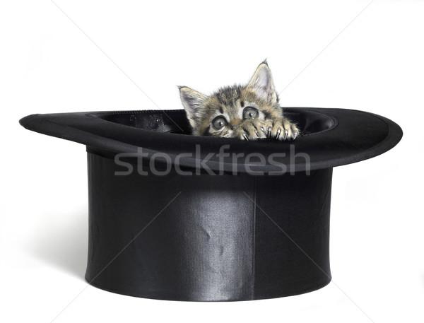 kitten hiding in top hat Stock photo © prill