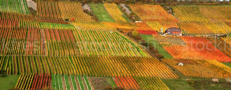 ősz szőlőskert díszlet idilli vidéki színes Stock fotó © prill