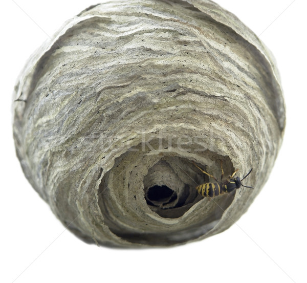 wasp´s nest Stock photo © prill