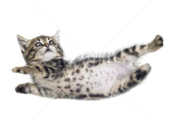 falling kitten Stock photo © prill