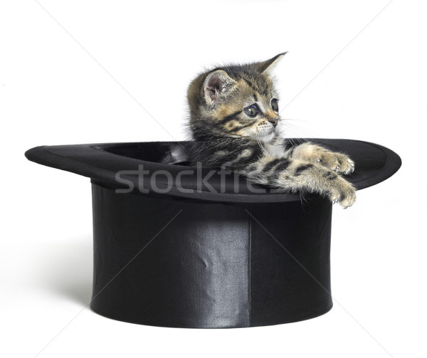 cute kitten playing in a black top hat Stock photo © prill
