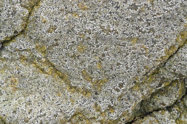 Tam kare detay sahil kaya oluşumu doğa kaya Stok fotoğraf © prill