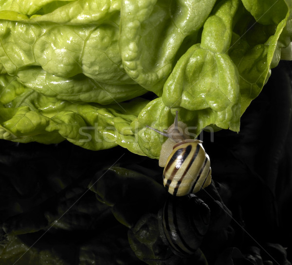 Grove snail and green salad Stock photo © prill