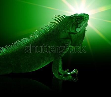 Zöld iguana portré misztikus mesterséges nap Stock fotó © prill