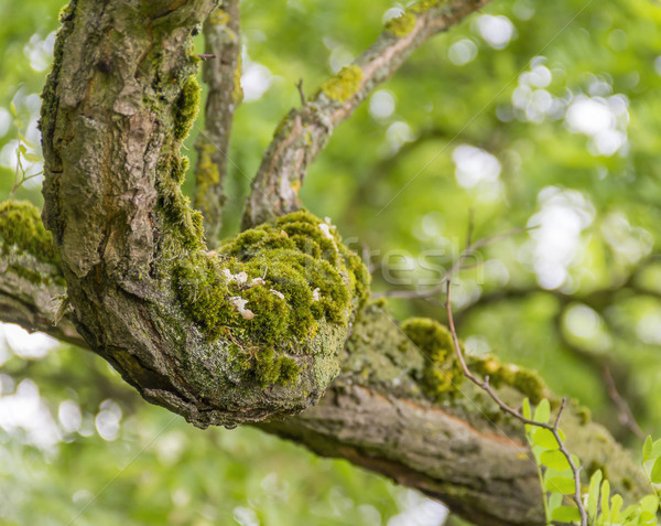 overgrown branch detail Stock photo © prill