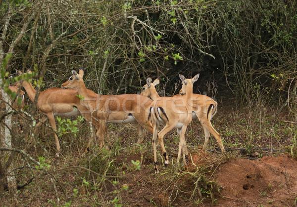 Ouganda Afrique paysages nature beauté groupe Photo stock © prill