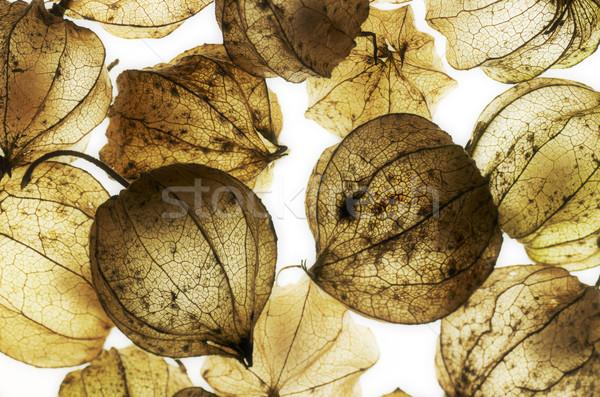 Rot chinese lantaarn detail blaas kersen Stockfoto © prill