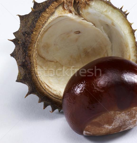 horse chestnut Stock photo © prill