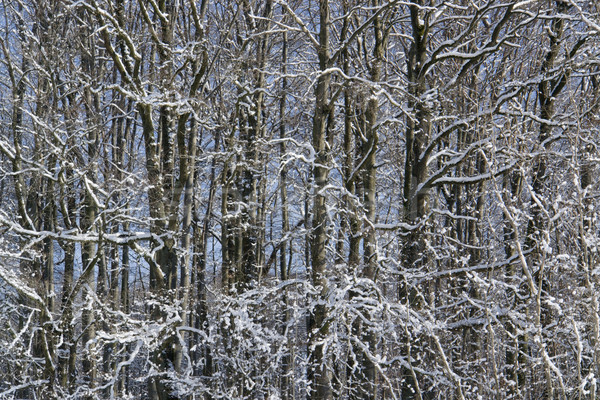 forest detail at winter time Stock photo © prill