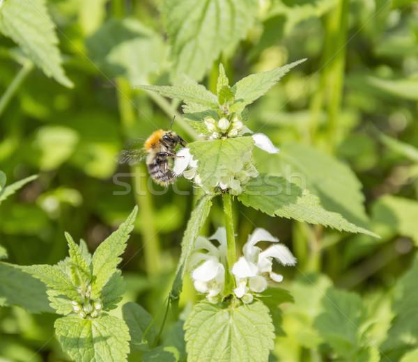 Méh virág napos tavasz természet nyár Stock fotó © prill