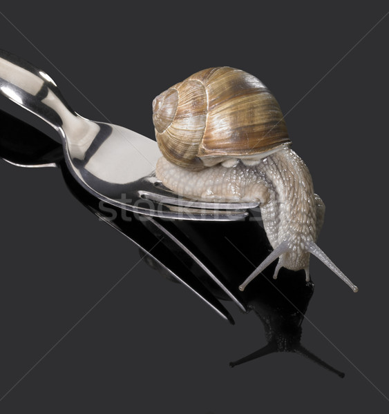 Grapevine snail on fork Stock photo © prill