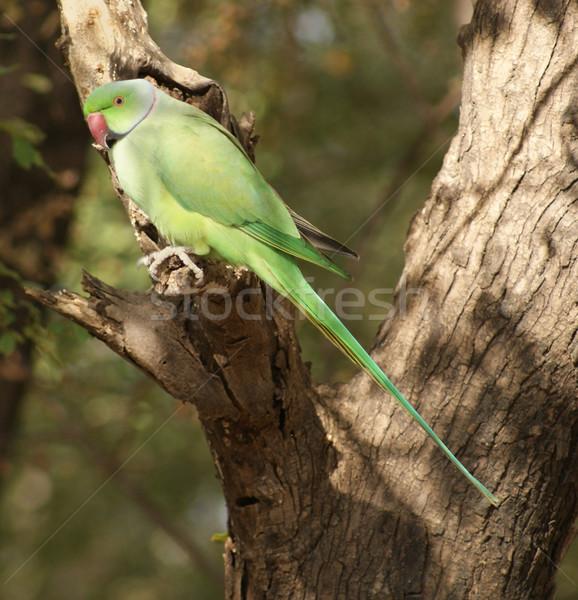 Madár erdő növény dzsungel állat papagáj Stock fotó © prill
