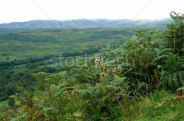 Panorámakép díszlet égbolt fű természet tájkép Stock fotó © prill