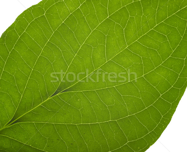 緑 マクロ 葉 詳細 抽象的な ストックフォト © prill