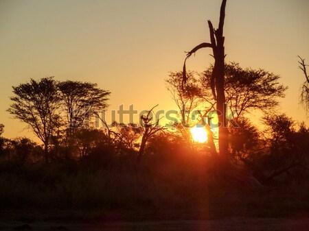 African scenario alberi vegetazione Botswana Foto d'archivio © prill