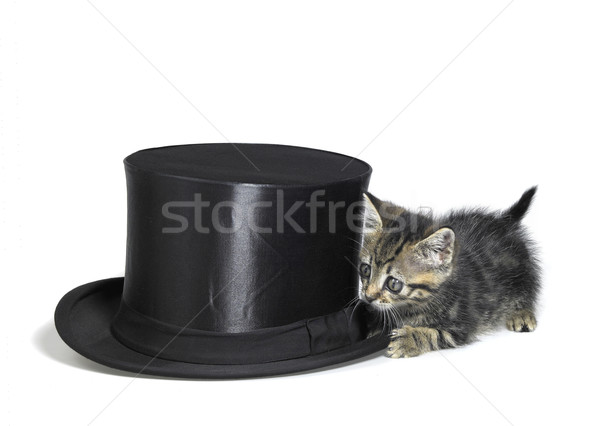 kitten hiding behind a top hat Stock photo © prill