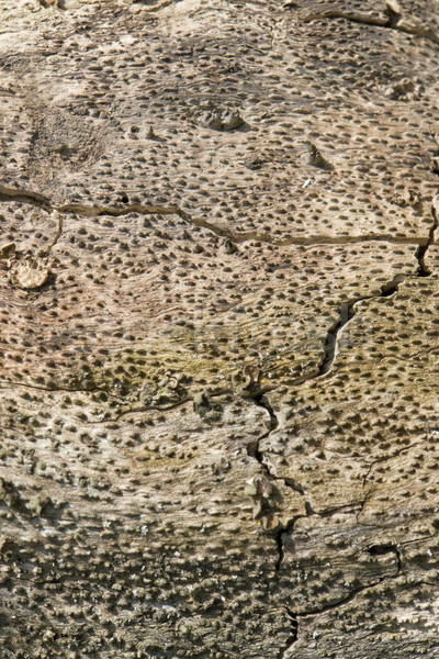abstract wood detail Stock photo © prill