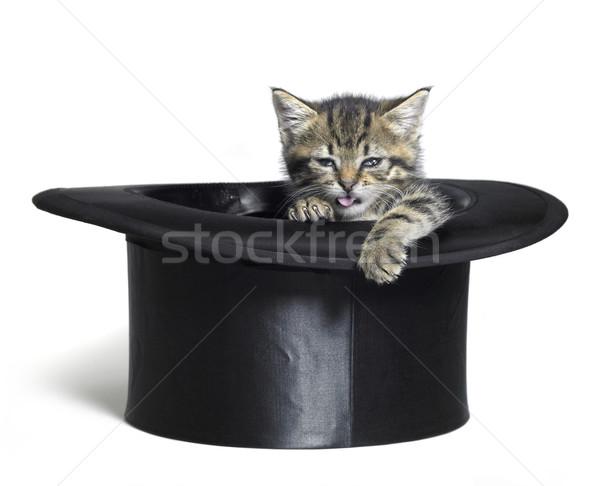 funny kitten in top hat Stock photo © prill