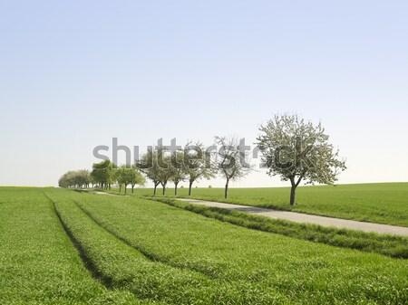 のどかな 風景 春 時間 森林 ストックフォト © prill