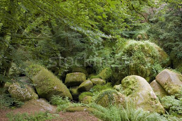 Pastoral doğal manzara büyük orman yaz Stok fotoğraf © prill