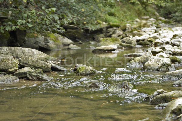 idyllic stream detail Stock photo © prill