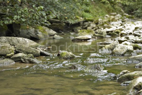 идиллический потока подробность небольшой южный Германия Сток-фото © prill