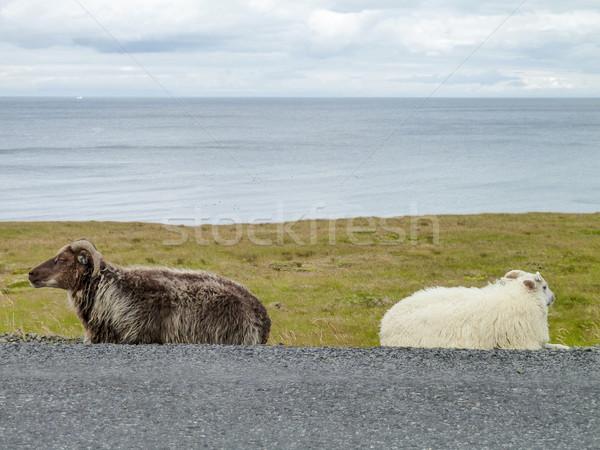 Birka Izland útszéli díszlet kettő út Stock fotó © prill