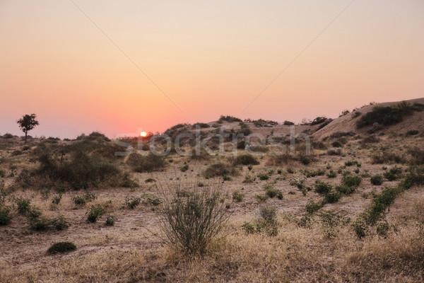 Pustyni idylliczny zachód słońca Indie charakter krajobraz Zdjęcia stock © prill