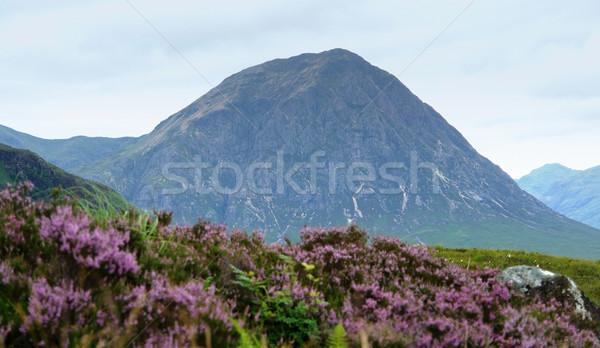 Díszlet Skócia körül ibolya virágok előtér Stock fotó © prill
