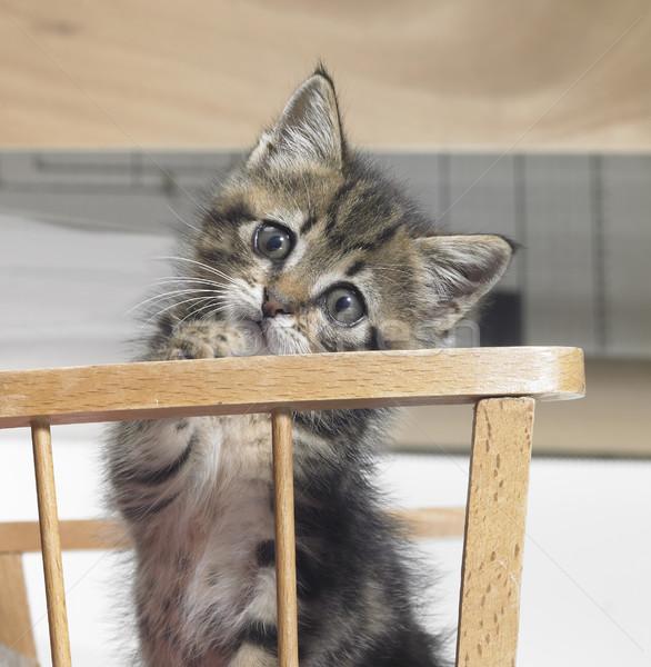 kitten in a wooden crib Stock photo © prill