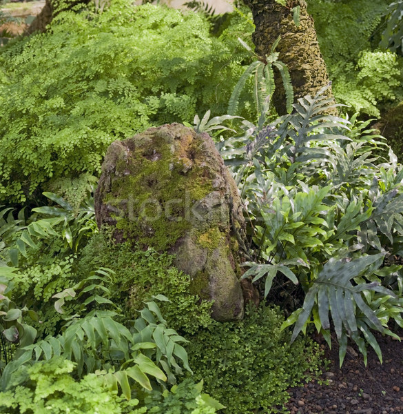 dense jungle vegetation scenery Stock photo © prill