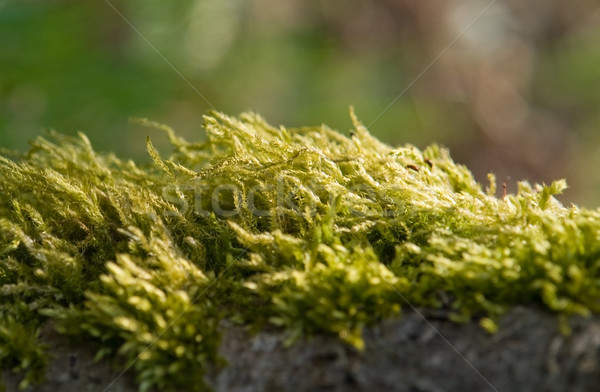 moss detail Stock photo © prill