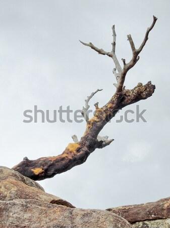 Toter Baum Boden stürmisch zurück Sri Lanka Himmel Stock foto © prill