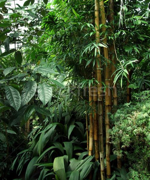 tropical greenhouse scenery Stock photo © prill