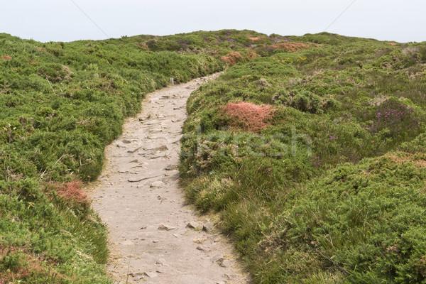 heathlands scenery Stock photo © prill