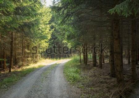 のどかな 森林 トラック 太陽 影 ツリー ストックフォト © prill