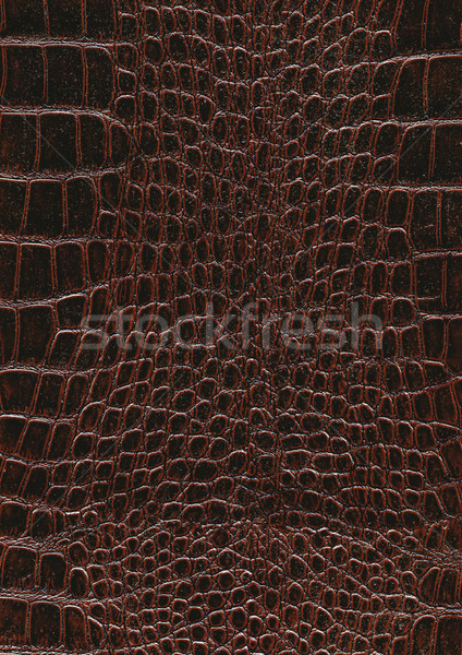 Réptil pele superfície quadro completo abstrato escuro Foto stock © prill