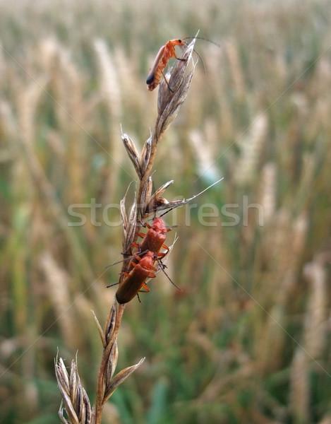 Soldado sessão grama plantas verão Foto stock © prill