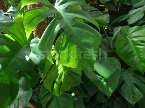foliage plants Stock photo © prill
