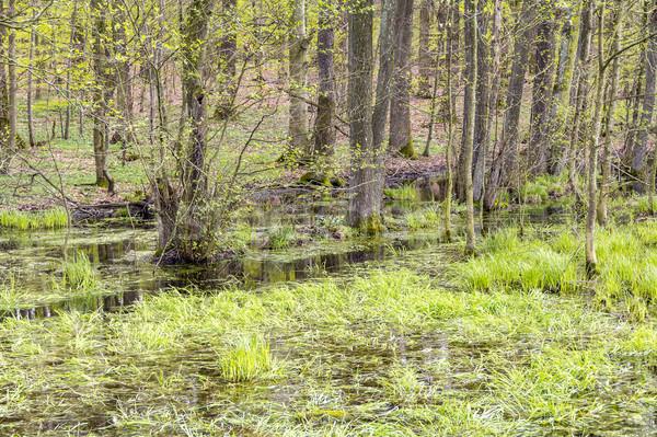 Orman bataklık manzara erken bahar zaman Stok fotoğraf © prill