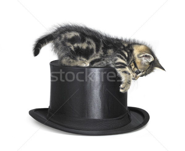kitten playing on top hat Stock photo © prill
