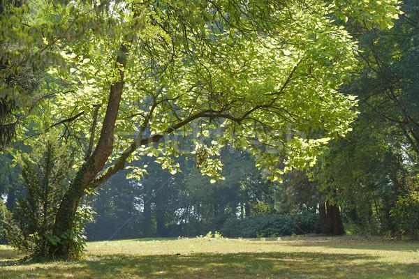 のどかな 公園 風景 夏 時間 春 ストックフォト © prill