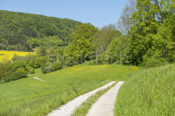 field path at spring time Stock photo © prill