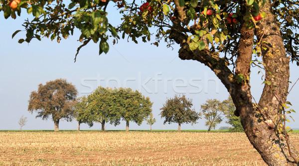 vespertine agriculture scenery Stock photo © prill