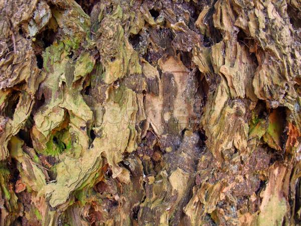 Durva ugatás közelkép full frame erdő absztrakt Stock fotó © prill