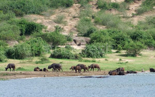 Africaine Ouganda Afrique nature paysage beauté Photo stock © prill